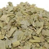 Close of up boneset herb