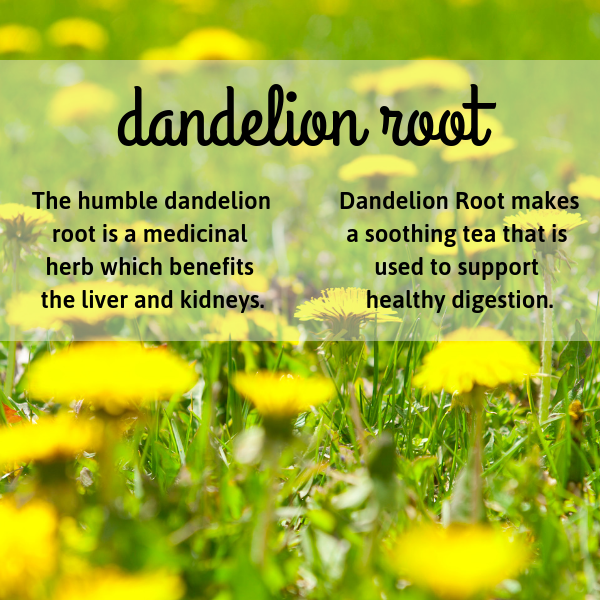Dandelion root is known for supporting bladder health and is used for herbal tea, herbal medicine, herbal formulas, and herbal products.