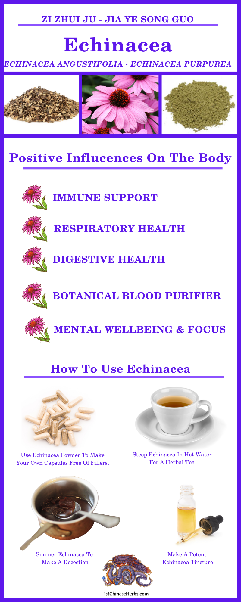 echinacea flu, echinacea respiratory infection, echinacea colds, echinacea respiratory health, echinacea immune booster