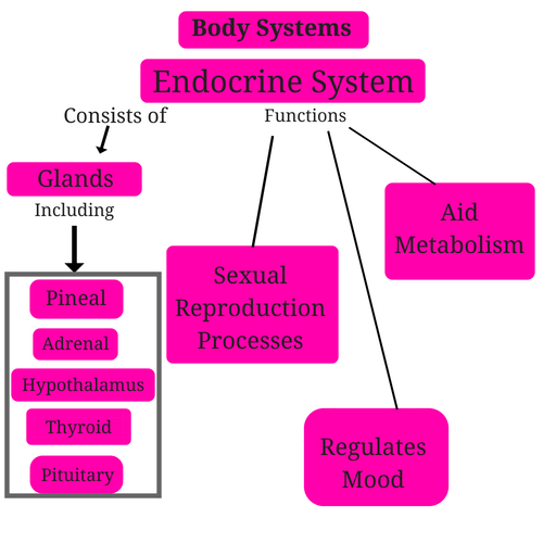 endocrine-system-body-systems.png