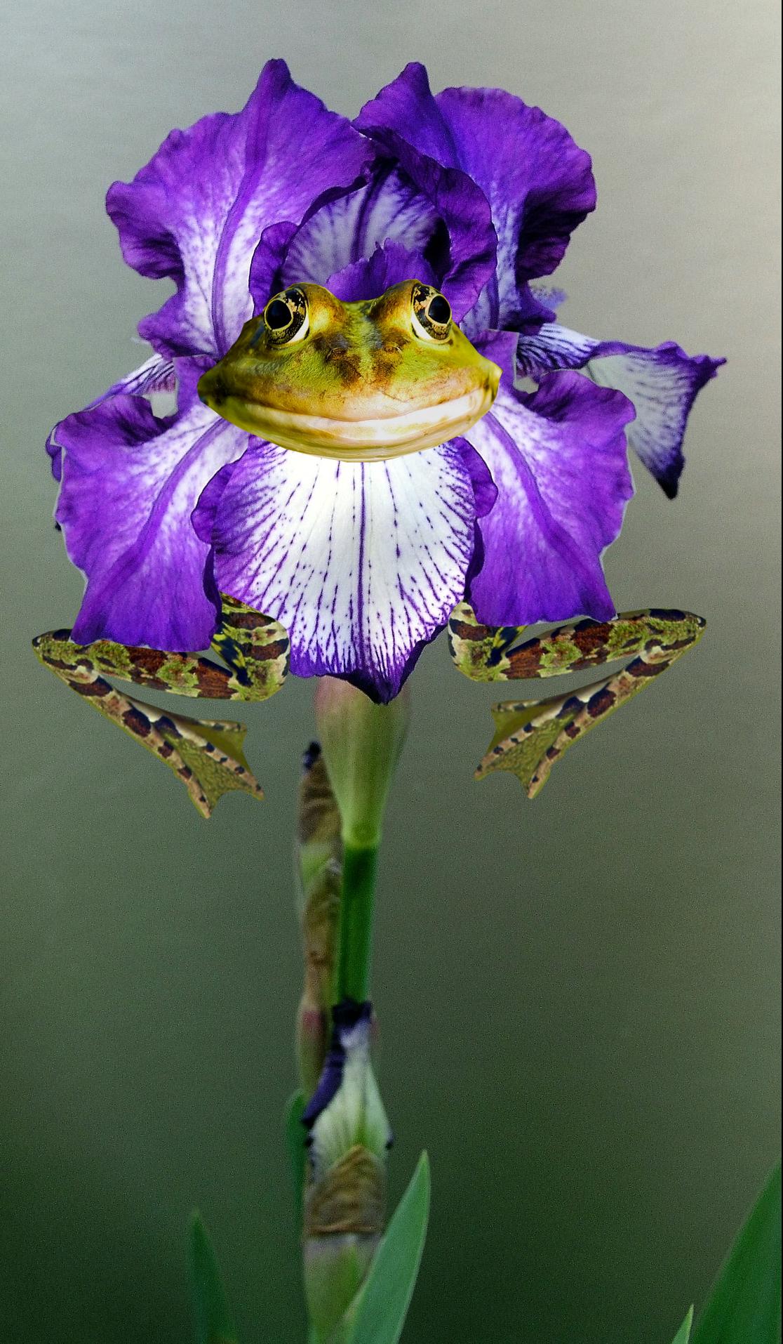 frog-flower-2.png
