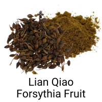Lian Qiao - Forsythia Fruit - immune booster, COVID19 herb