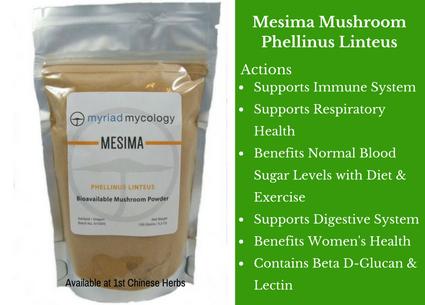 mesima mushroom, mushroom, myriad mycology, traditional bulk herbs, bulk tea, bulk herbs, teas, medicinal bulk herbs