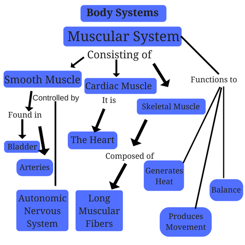 muscular-system-body-systems.png