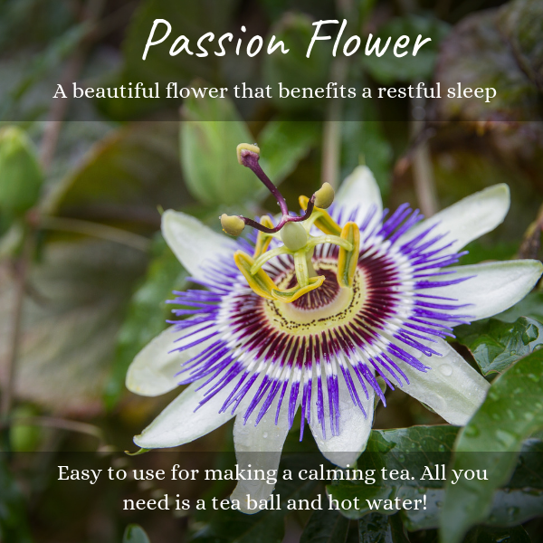 Passion flower herb is often used for herbal tea, herbal remedies, and herbal formulas. It is an herb used for sleep and health. It is an herb that makes a calming tea.