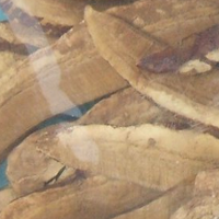 red-reishi-200-size-1.png