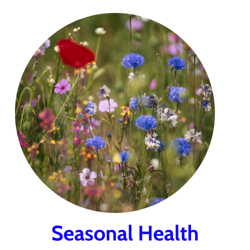 Shop herbs to support seasonal respiratory health.