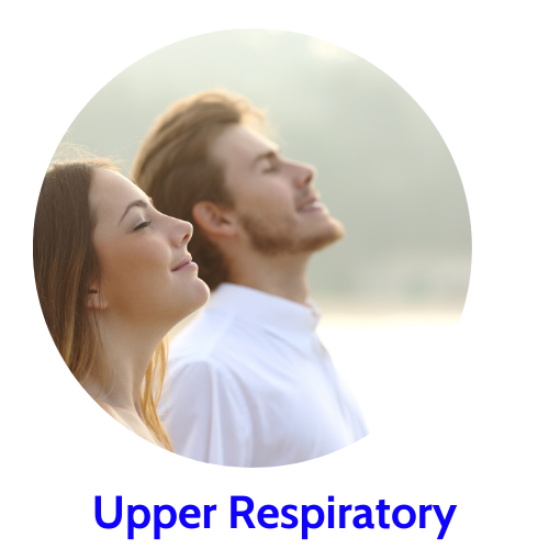 herbs for upper respiratory health
