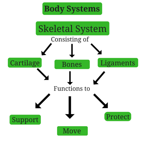 skeletal-system-body-systems.png