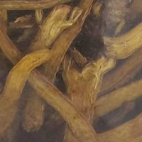 Close up of Skullcap Root