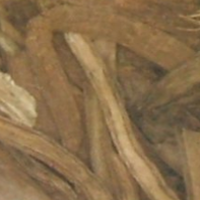 Close up of Teasel Root