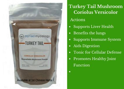 turkey tail, turkey tail mushroom, mushrooms, traditional bulk herbs, bulk tea, bulk herbs, teas, medicinal bulk herbs, myriad mycology