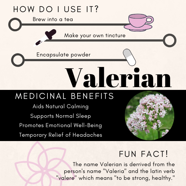 Herbal Information about the traditional medicinal herb Valerian Root, sometimes just called Valerian, botanical name Valerian Officinalis. Sometimes called Setwell, Wild Valerian, English Valerian and Valerian Wallichii