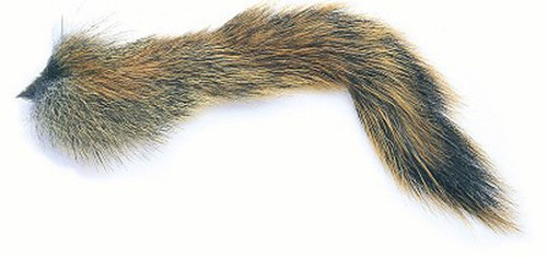 Pine squirrel Tail
