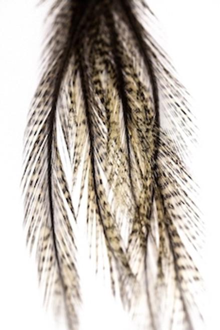 Coq de Leon Feathers
