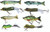 8pc Swimbait and Top Water Variety Pack
