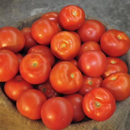 Loose Tomato