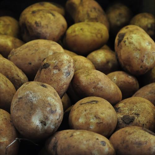 Brushed Potato