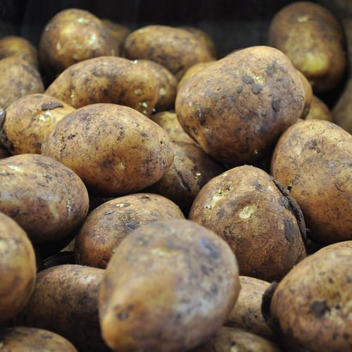 Dutch Cream Potato