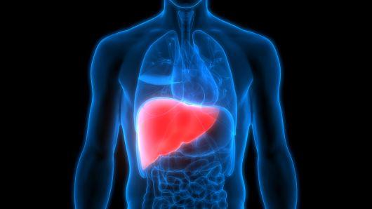 liver.jpeg