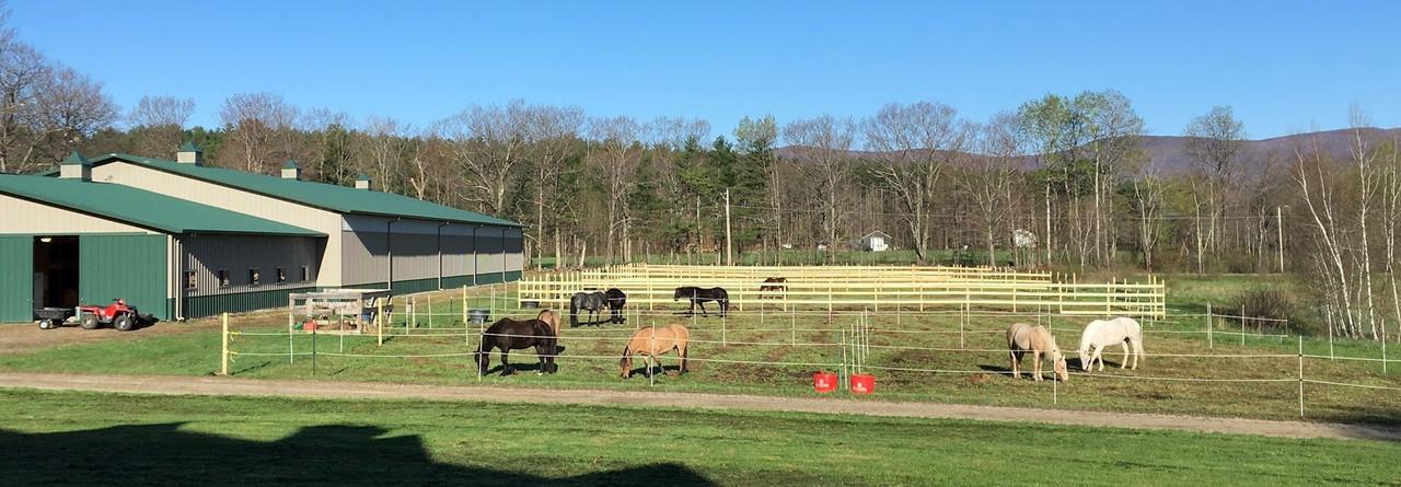 Horsemanship Clinics
