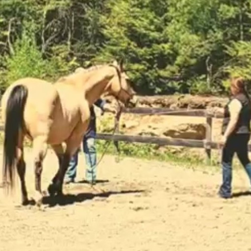 Stage 1 Horsemanship Clinics - May 15th
