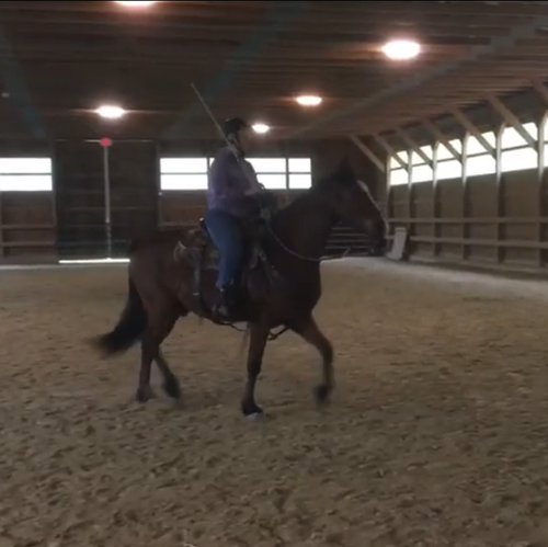 Advancing Stage 2 Horsemanship Clinic - July 4th