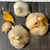garlic-elephant-91869.1435765777.168.168.jpg