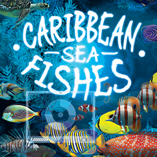 Caribbean Seafishes
