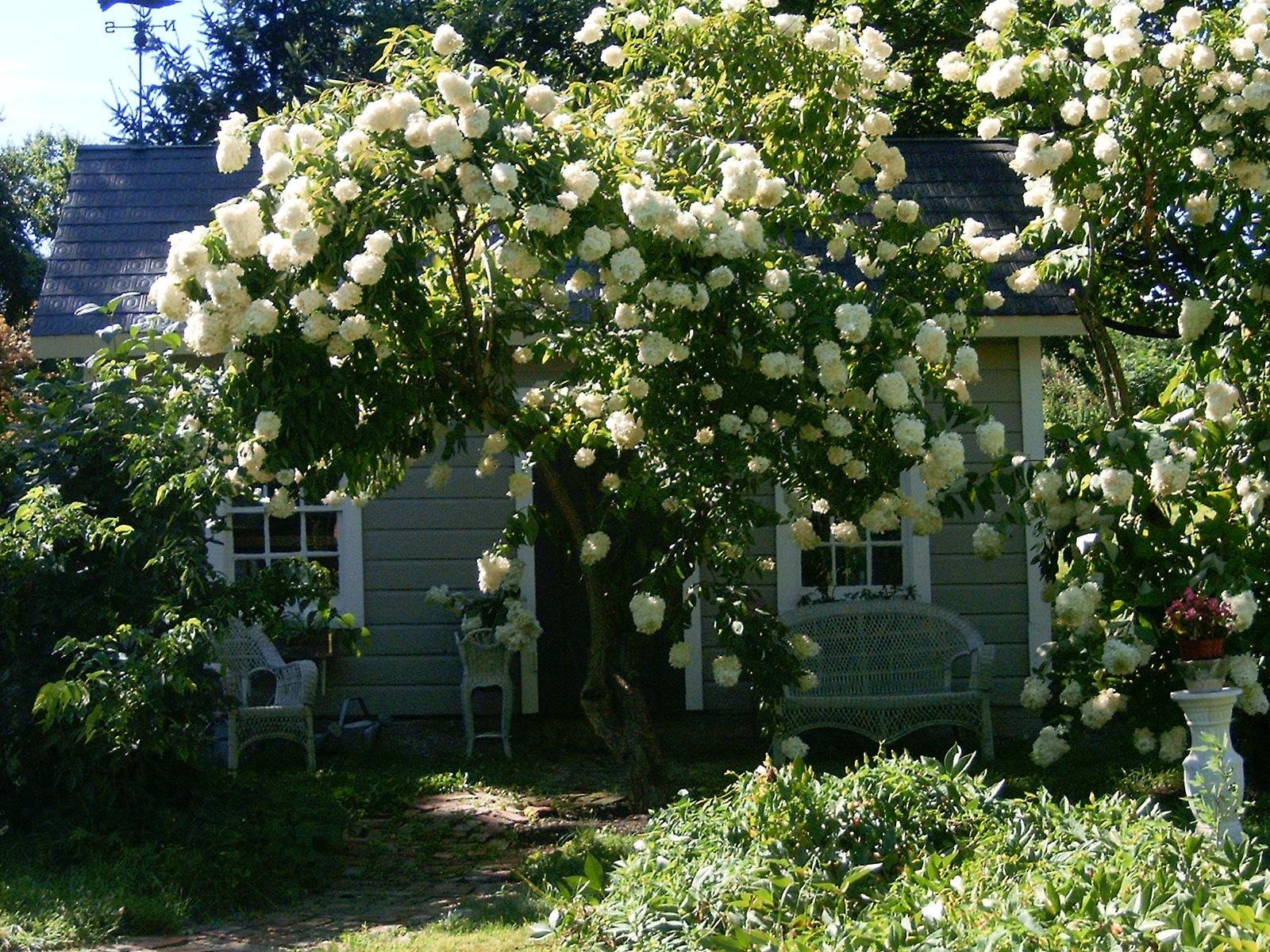 garden-collage-4.jpg