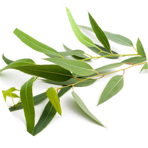 Eucalyptus and mint make the perfect pair to create a refreshing spa scent.