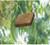 Sensation - Eucalyptus-Spa)