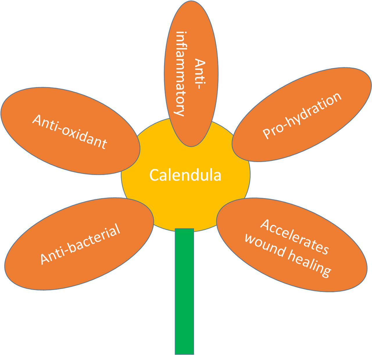 The Benefits of Calendula Officinalis on Protecting the Skin from the Harmful Effects of Radiation