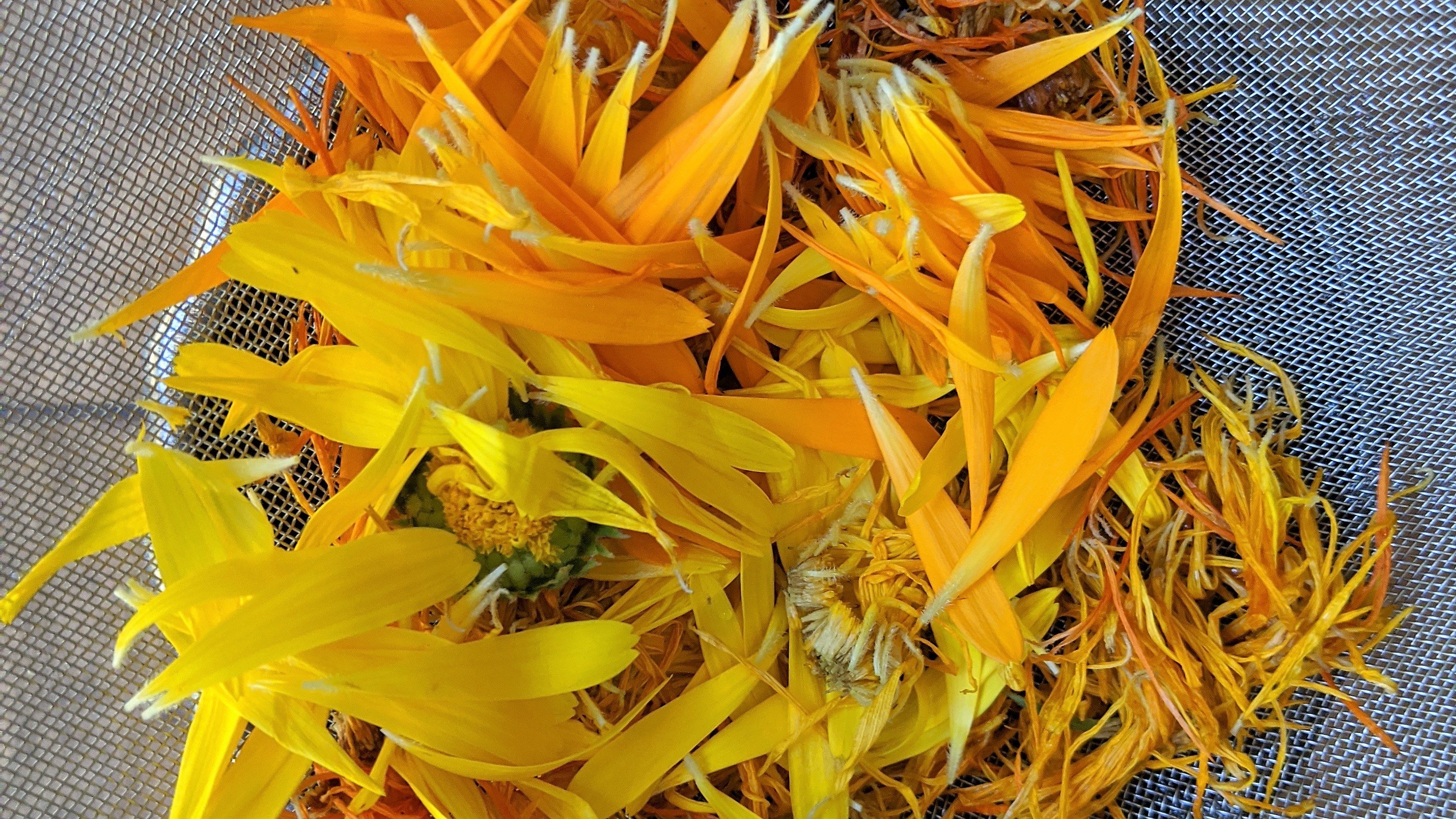 calendula-petals.jpg
