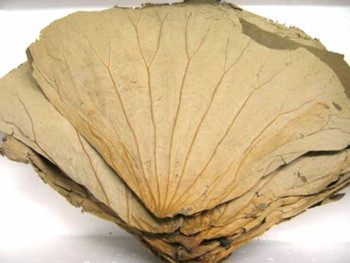 DRIED LOTUS LEAf 400G