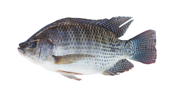 TILAPIA GILLED GUTTED SCALED PER KG