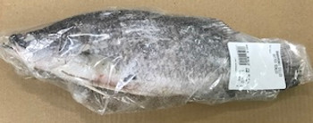 BARRAMUNDI GILLED GUTTED SCALED PER KG