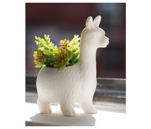 Lloyd the Llama