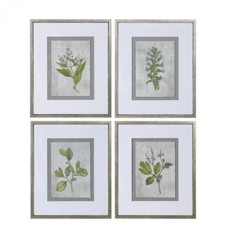 Uttermost Stem Study Framed Prints Set/4 (85|33690)