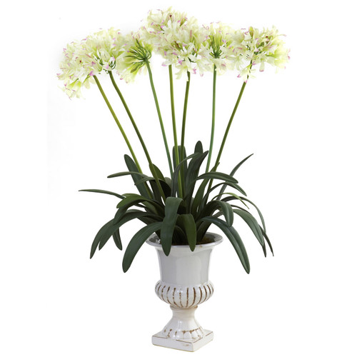 African Lily with Urn Color: White