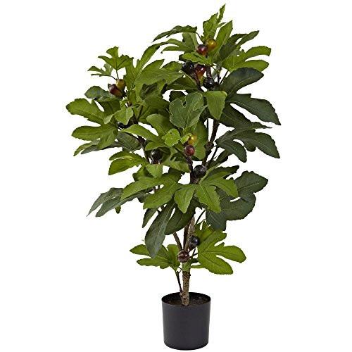 "32"" Fig Tree w/42 Lvs & 15 Figs"