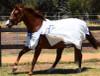 Summer Tearstop Paddock Rug sizes 6'9-7'3