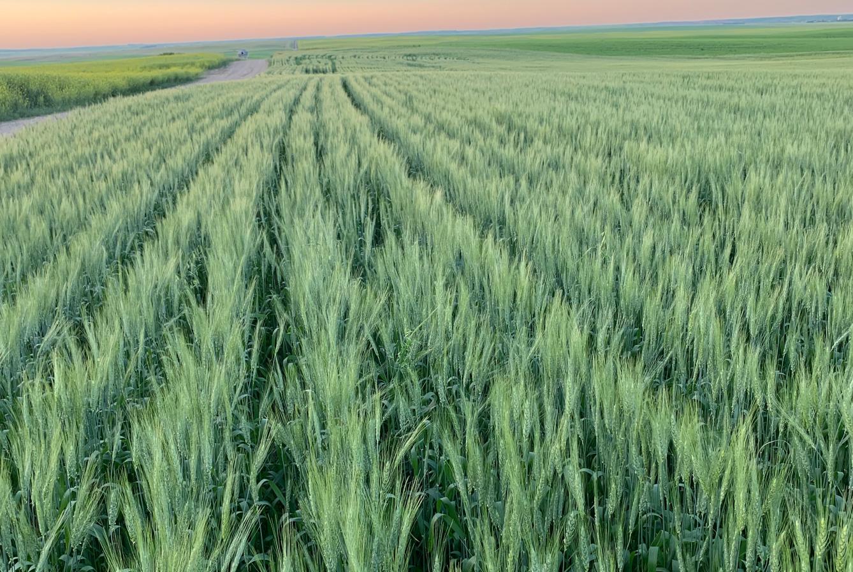 Sustainable Field