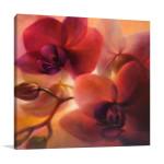 Annette Schmucker | Orchids