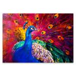 Peacock Beauty