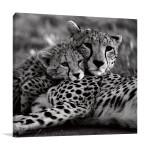 Cheetah With Cub Wall Art Print