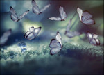 Glowing Butterflies Wall Art Print