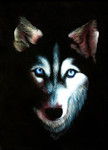 Husky Dog Wall Art Print