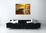 Savanna Lion Wall Art Print on the wall