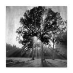 Black and White Trees Wall Art Print